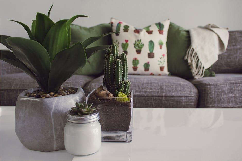 Planter på et bord